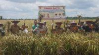 Masyarakat Desa Terusan Mulya bersama Bupati Kapuas Ben Brahim S. Bahat dan Deputi Rehabilitasi dan Rekonstruksi BNPB Harmensyah melakukan panen raya padi di lahan bekas kebakaran lahan dan hutan (Karhutla) di Kabupaten Kapuas